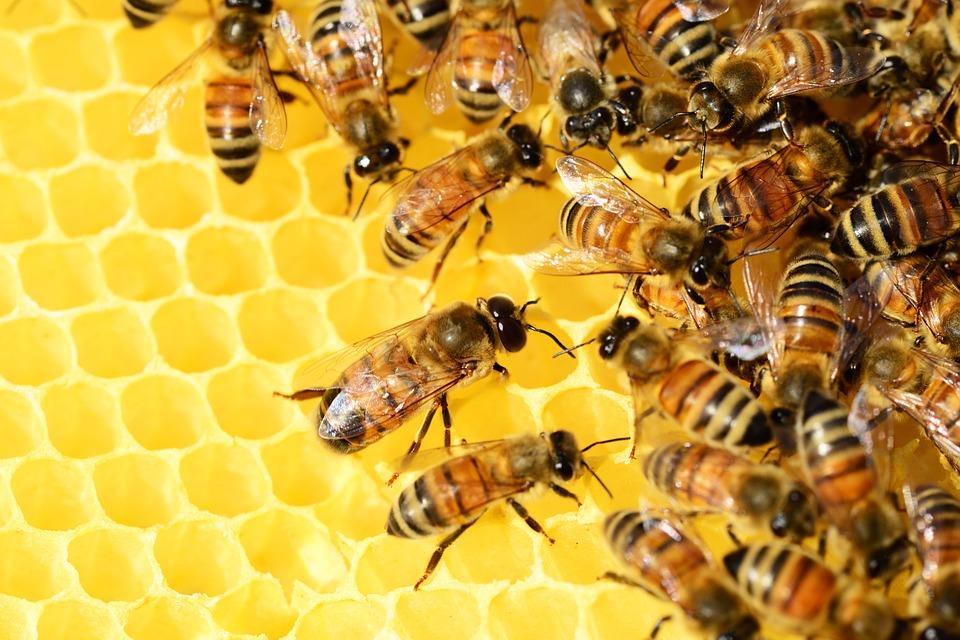 На Одещині створять медовий агрокластер