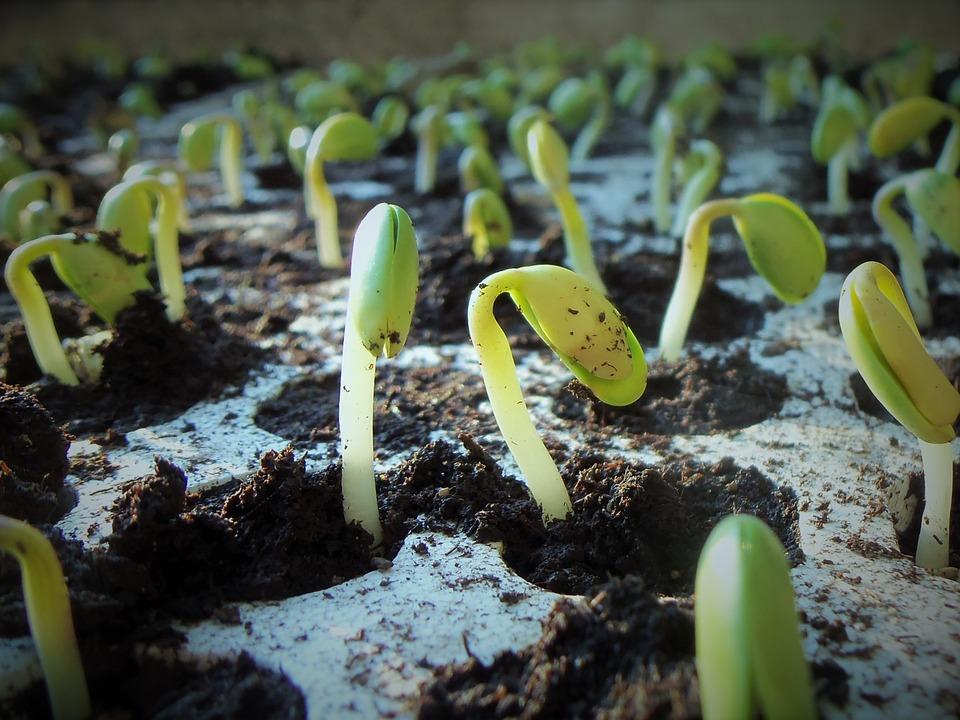 Аграрії Вінниччини збільшать площі під посівами кукурудзи та сої