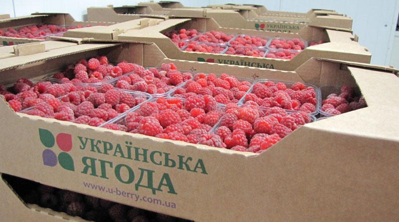ДУМКА: Продуманий збут та маркетинг збільшує ціну фермерської продукції в рази