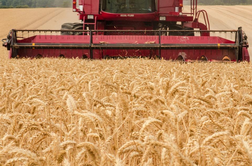 Уряд затвердив критерії оцінки ризику у сфері охорони прав на сорти рослин