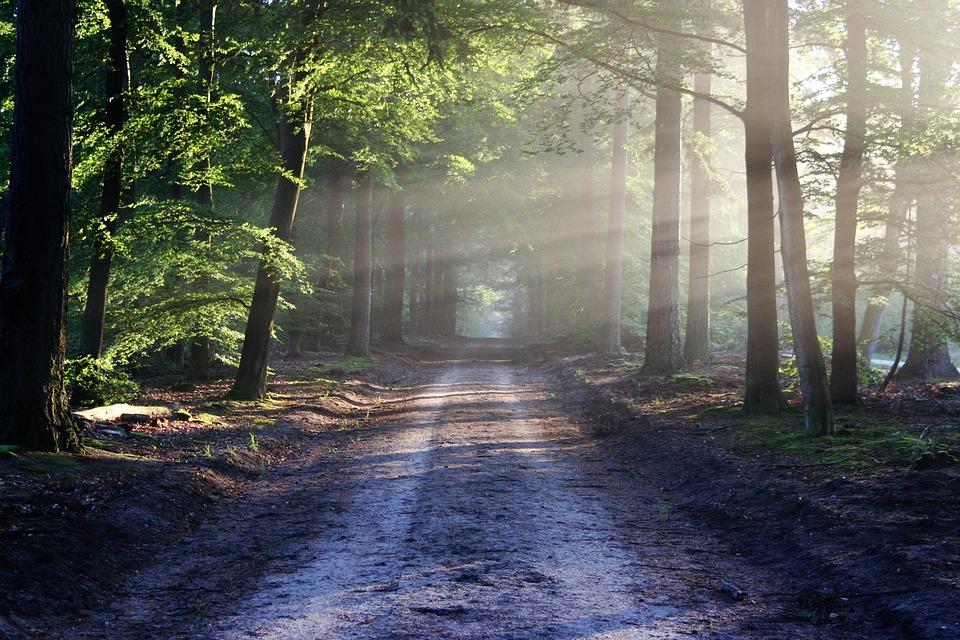 В Україні пропонують створити Міністерство лісового господарства