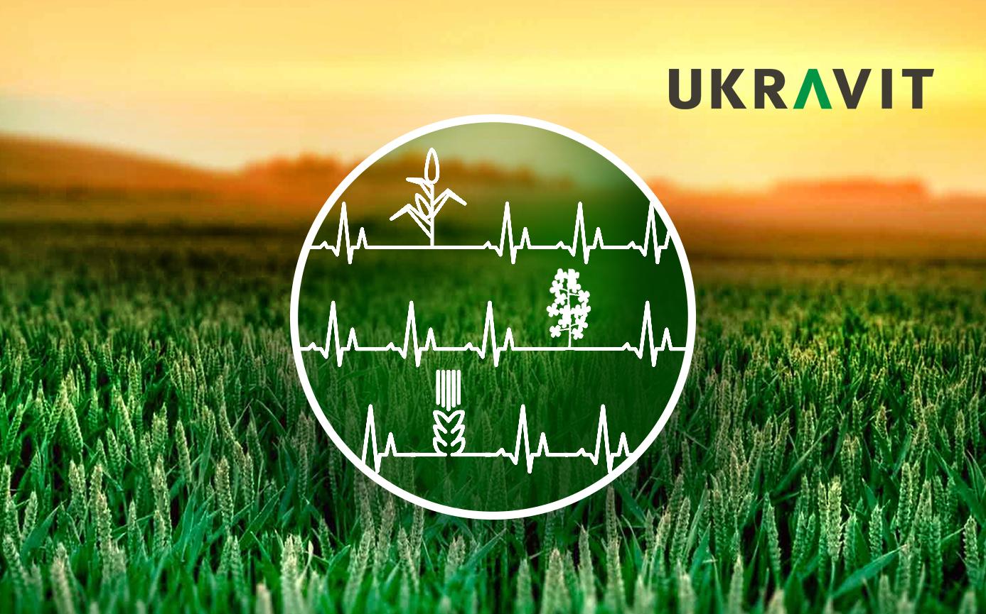 Кардіологія поля: вирощуємо кукурудзу, пшеницю та ріпак - перше знайомство