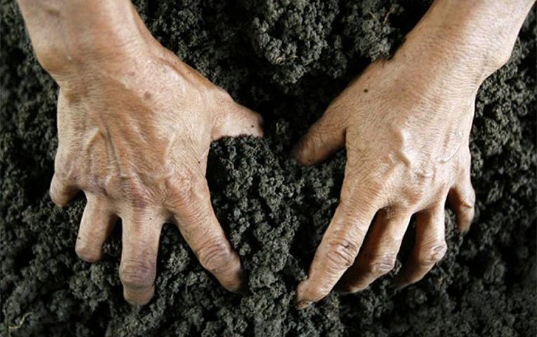 Якому обробітку ґрунту ви надаєте перевагу?