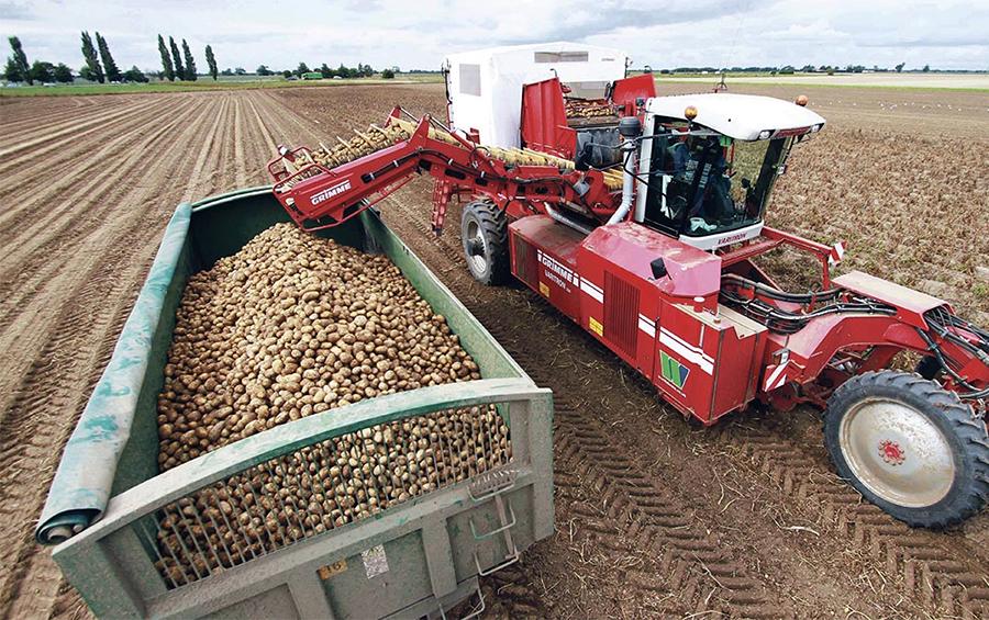 Просапати вікно у Європу: коли картоплярі почнуть експортувати, та як це вплине на ціну бульби