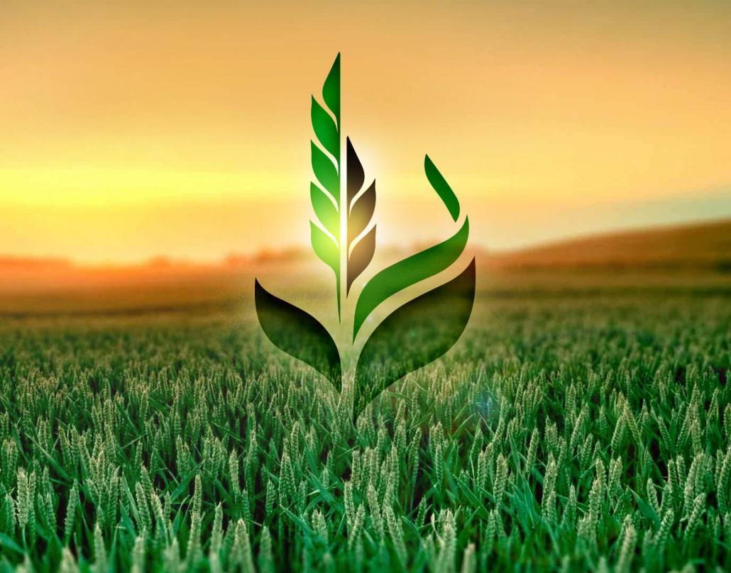 В НАБУ прокоментували ситуацію з обшуками в «Аграрному фонді»