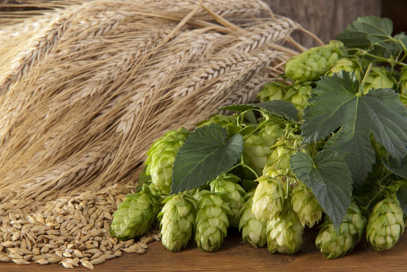 Думка: Вирощування пивоварного ячменю на 15% рентабельніше звичайного